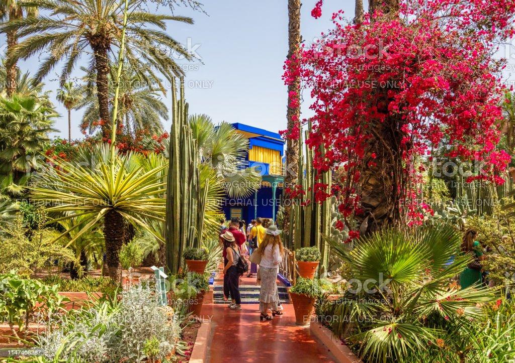 Tropical Garden Le Jardin Majorelle Stock Photo Download Image Now Istock