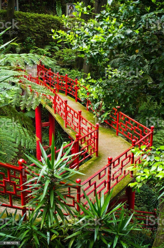 Tropical garden on Monte mountain - Funchal, Madeira island stock photo