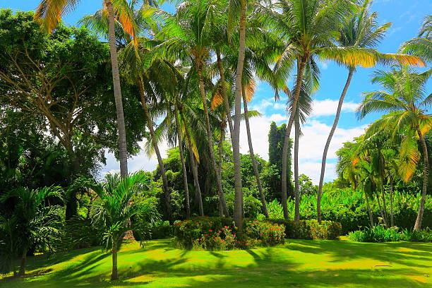 tropical garden paradise relax, green coconut palm trees foliage shadow - palmengarten stock-fotos und bilder