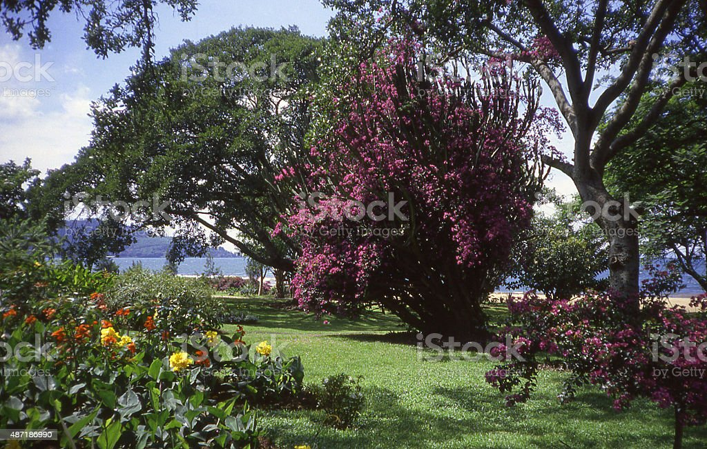 Tropical garden park Lake Kivu Gisenyi City Rwanda Central Africa stock photo