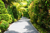 Tropical garden pathwey