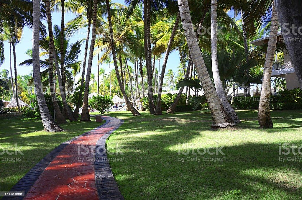 Tropical garden stock photo