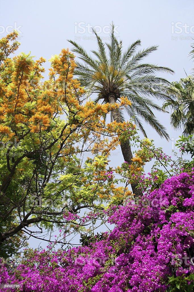 Tropical Garden  royalty free stockfoto
