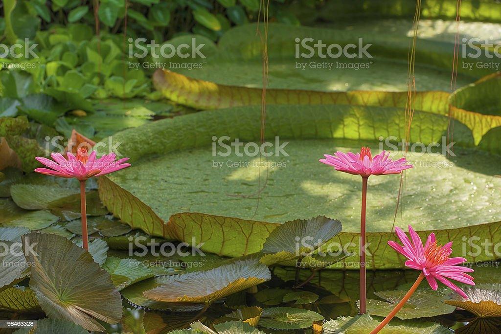 Giardino tropicale foto stock royalty-free