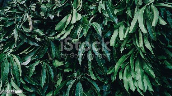 915520716 istock photo Tropical Garden, Vertical Plant 1195774696