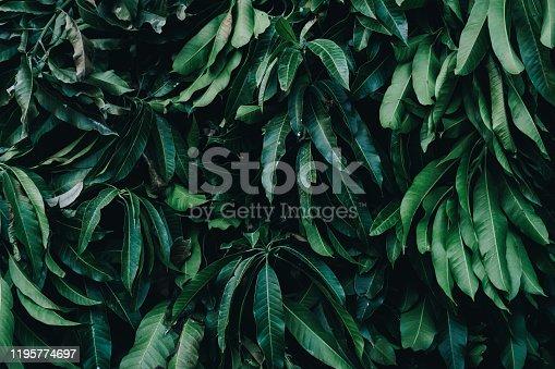 915520716 istock photo Tropical Garden, Vertical Plant 1195774697