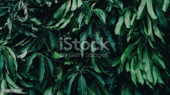 915520716 istock photo Tropical Garden, Vertical Plant 1195774757