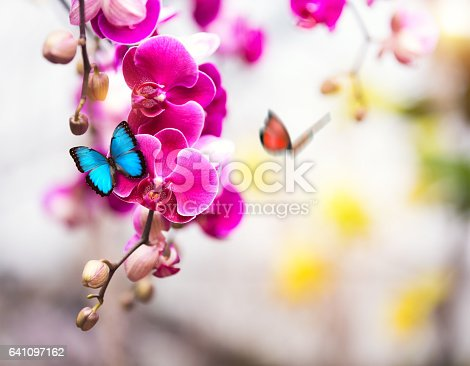 Orchids With Butterflies.