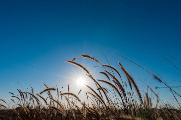 Tropical grass with blue sky and sun stock photo
