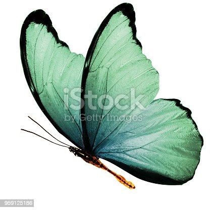 999676880 istock photo tropical green flying butterfly isolated on white background 959125186