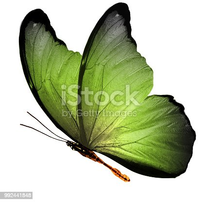 999676880 istock photo tropical  green flying butterfly isolated on white background 992441848