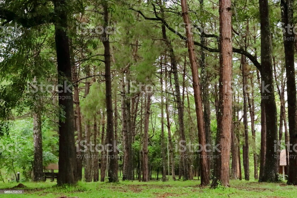 Tropical green forest landscape royalty-free stock photo