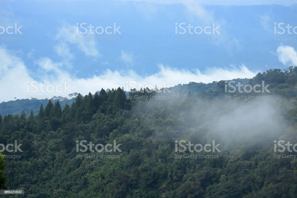 Tropical green forest with blue sky landscape royalty-free stock photo