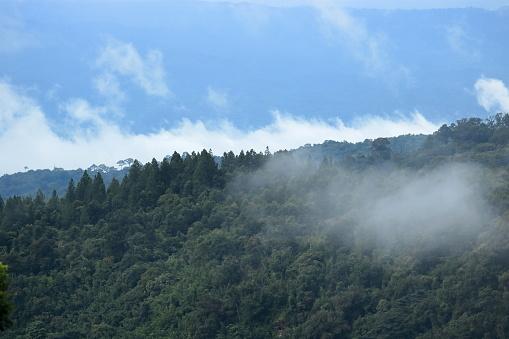 푸른 하늘 풍경와 열 대 숲 0명에 대한 스톡 사진 및 기타 이미지