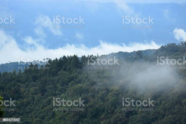 Foto de Floresta Tropical De Verde Com Paisagem De Céu Azul e mais fotos de stock de Arbusto