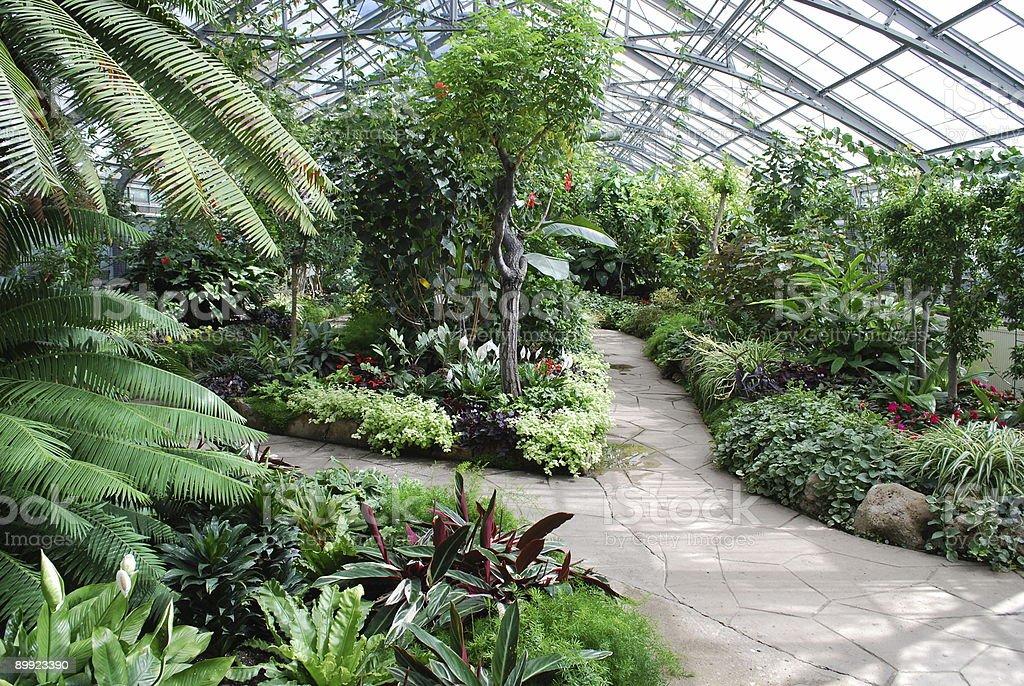 Tropical green house garden in Toronto royalty-free stock photo