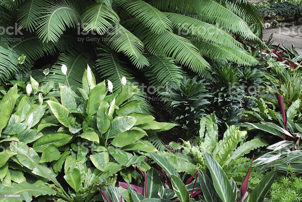 Tropical green house garden in Toronto royalty-free stock photo