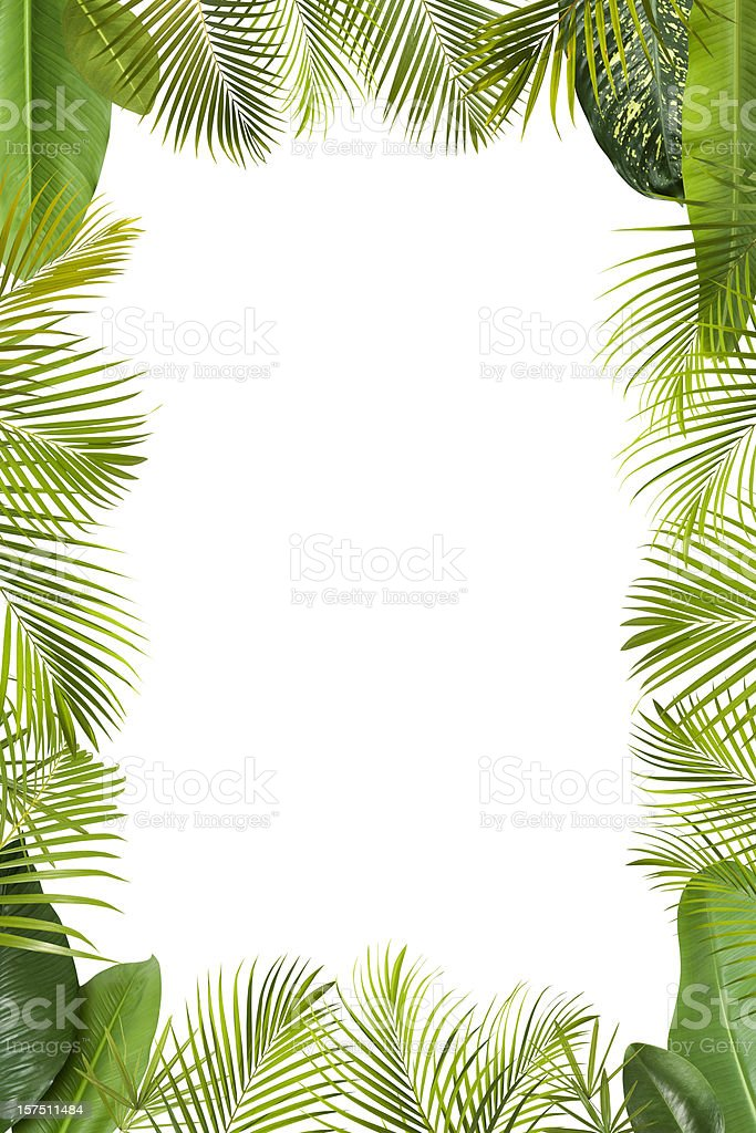 Tropical green leaves frame isolated on white with copy space stock photo