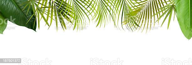Tropical green leaves frame with copy space picture id157501372?b=1&k=6&m=157501372&s=612x612&h=oh 3gkbmeejyfe0lrskmnvppbwsayhvlss1xhhvrb44=
