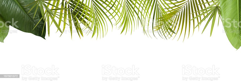 Tropical green leaves frame with copy space​​​ foto