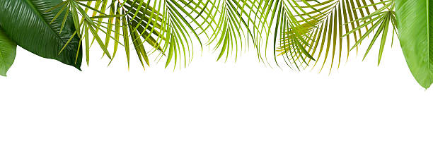 Tropical green leaves frame with copy space stock photo