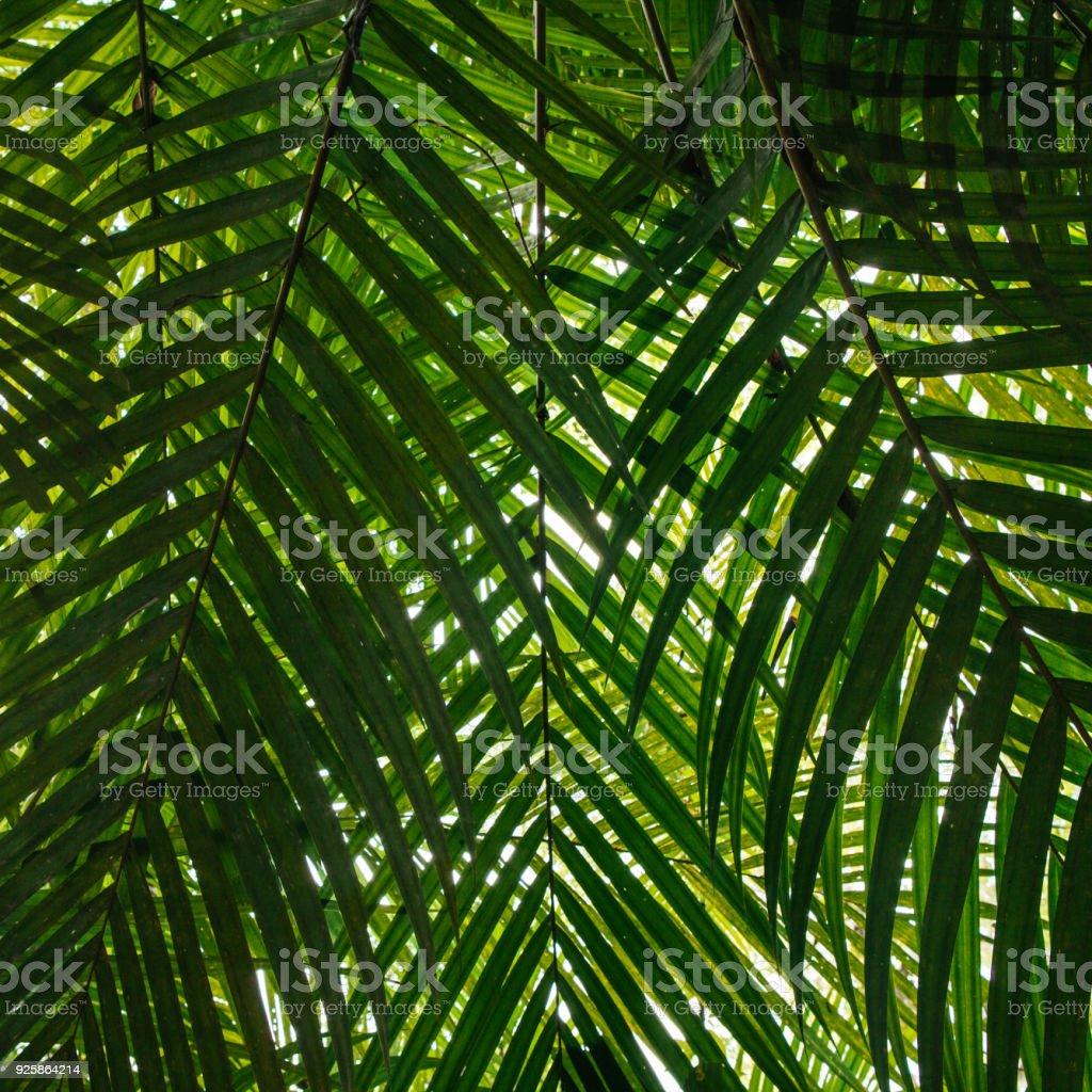 Tropische grüne Blätter – Foto