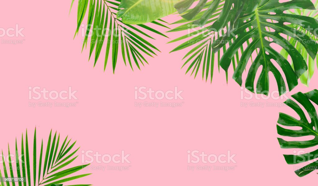 Tropical green leaves stock photo