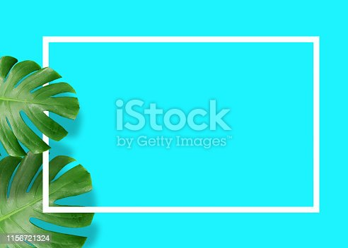 655667160 istock photo Tropical green monstera leaves nature on blue background with frame design 1156721324