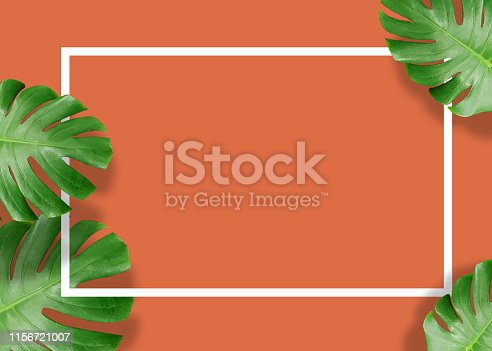 655667160 istock photo Tropical green monstera leaves nature on orange background with frame design 1156721007