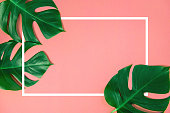 Tropical green monstera leaves nature on pink background with frame design for creative advertising with summer and spring concept, copy space, Top view, Flat lay.