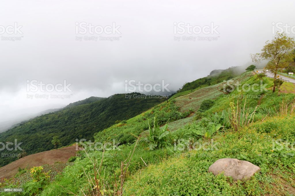Tropical green mountain with heavy fog in rainy day zbiór zdjęć royalty-free