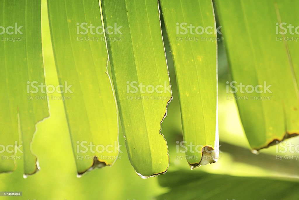 Tropical green natural background royalty-free stock photo