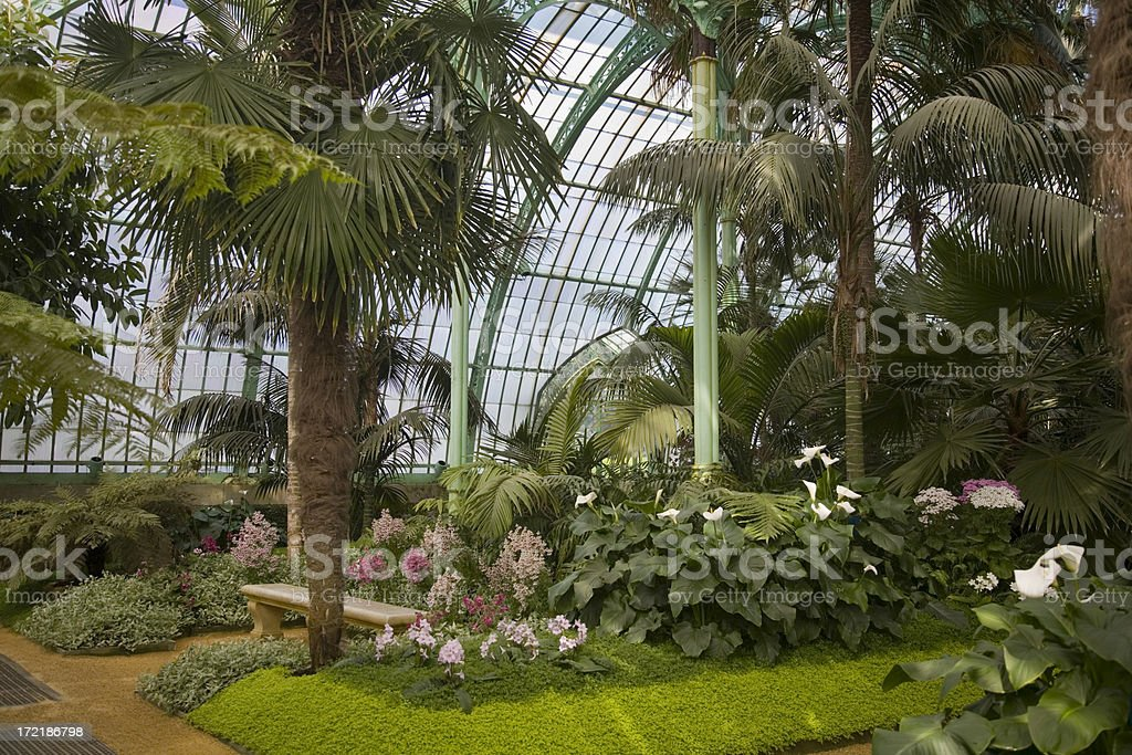 "Tropical greenhouse interior with palm trees and bench ""Interior of a tropical greenhouse, with palm trees. Location: Laeken Royal Greenhouses, Brussels."" Bench Stock Photo"