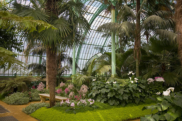 Tropical greenhouse interior with palm trees and bench stock photo