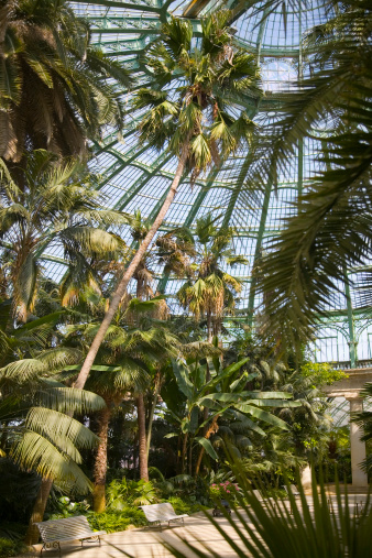 Tropical Greenhouse Interior With Palm Trees Stock Photo - Download Image Now