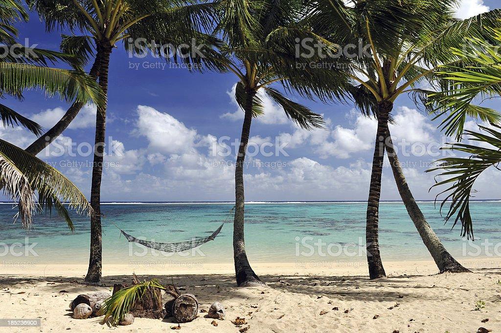 Tropical hammock stock photo