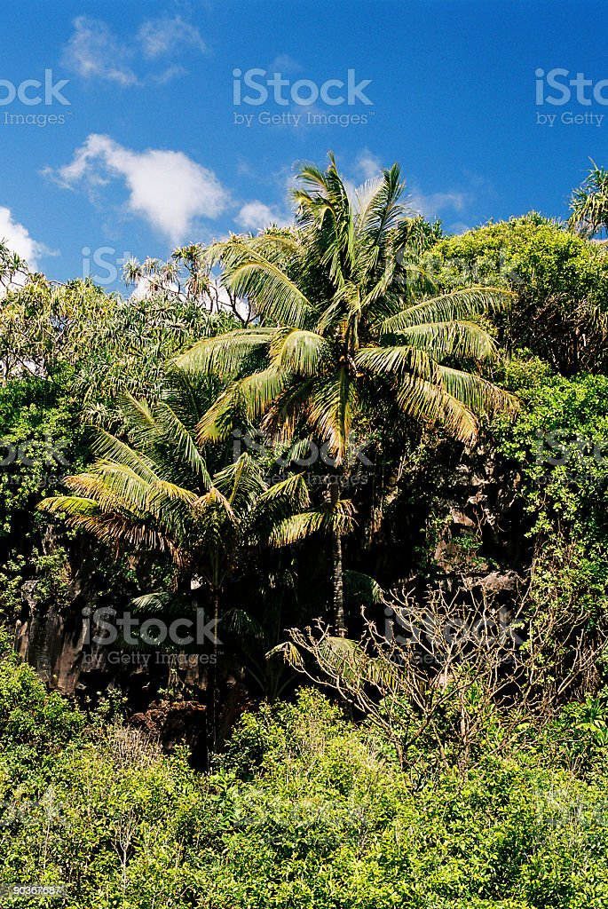Tropical Hawaii hillside palm royalty-free stock photo