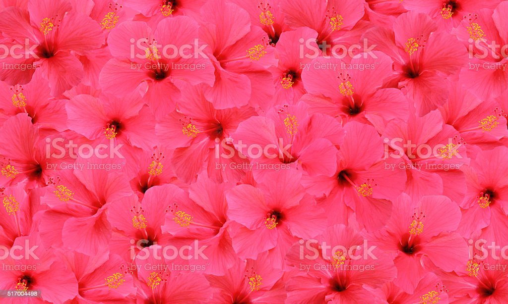 Tropical hibiscus flower pattern stock photo
