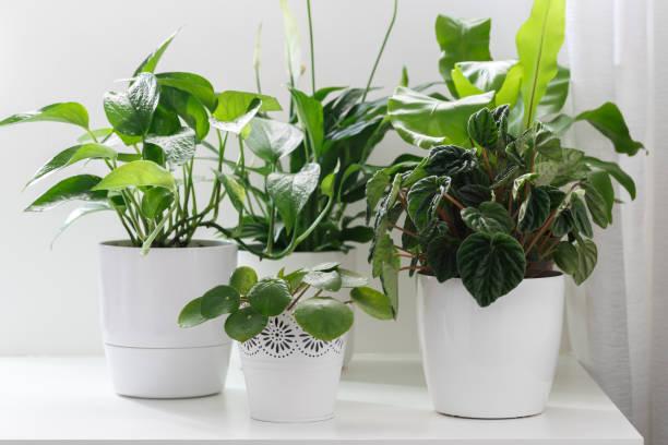Tropische Hauspflanzen – Foto