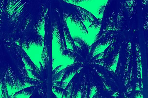 Tropical image picture id1094434860?b=1&k=6&m=1094434860&s=612x612&w=0&h=hpwh a6ycymsb7b pialxhjfyvjtcaldeg6goothlhm=