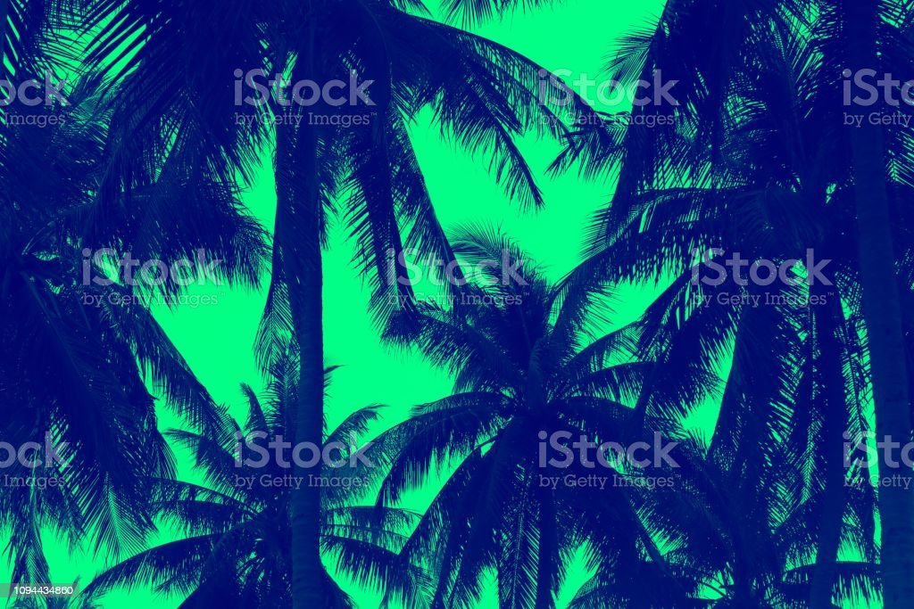 tropical image stock photo