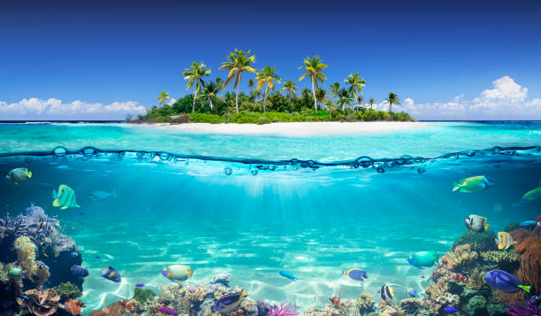 Tropical Island And Coral Reef - Split View With Waterline stock photo