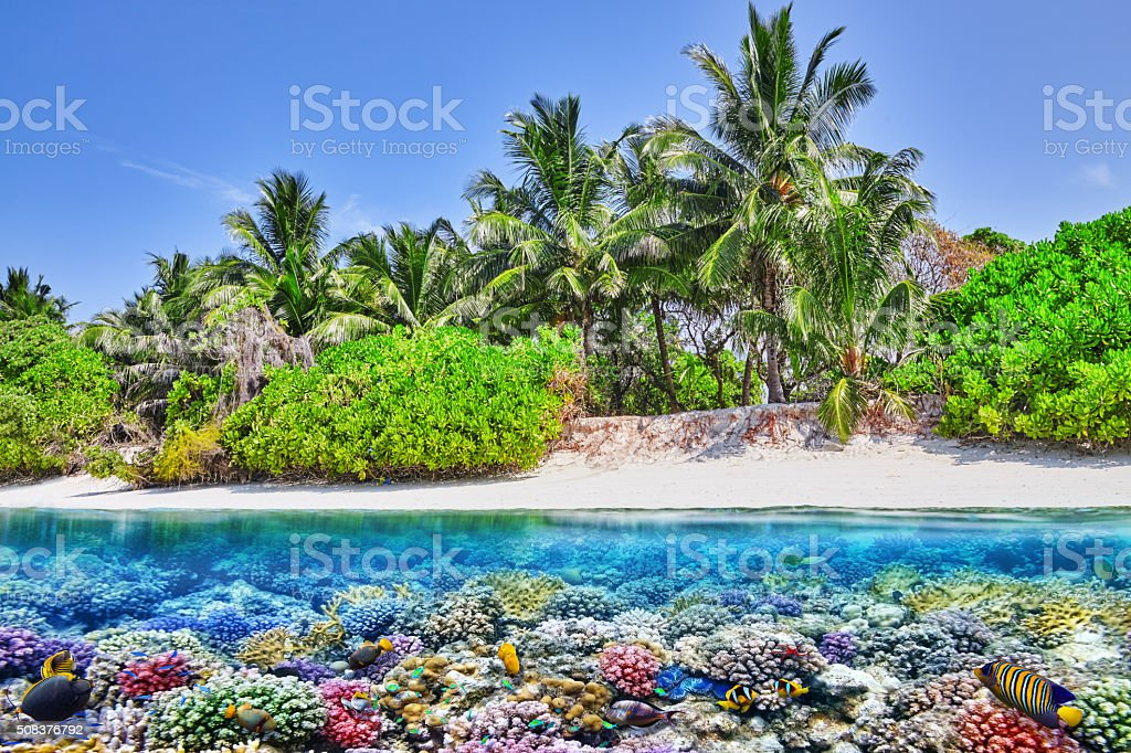 Tropical island and the underwater world in the Maldives. stock photo
