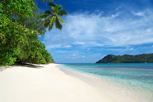 tropical island beach scene with palm tree and blue sky - desert island stock photos and pictures