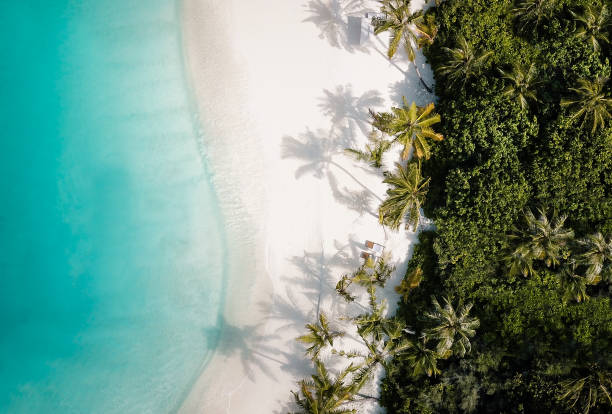 yukarıdan tropikal ada palmiye ağacı plaj - beach stok fotoğraflar ve resimler