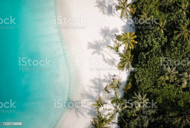 Photo of Tropical island palm tree beach from above