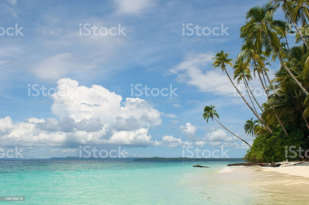 tropical island - sea, sky and palm trees royalty-free stock photo