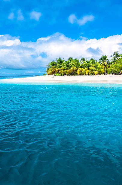 tropical island turquoise beach with coconut trees - bahama's stockfoto's en -beelden