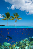 A tropical island with a coral reef.