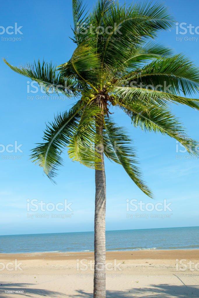 Photo Chaise Longue Océan Île Indien Tropicale Droit De Libre fbvY7yg6
